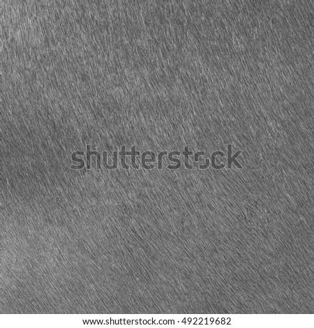 gray natural fur texture closeup. Useful as background