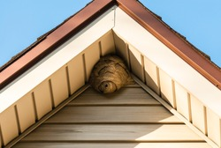 Gray paper wasp nest in corner of triangular roof attached to aluminium siding, bordered by brown roof edge, against blue sky in corners.