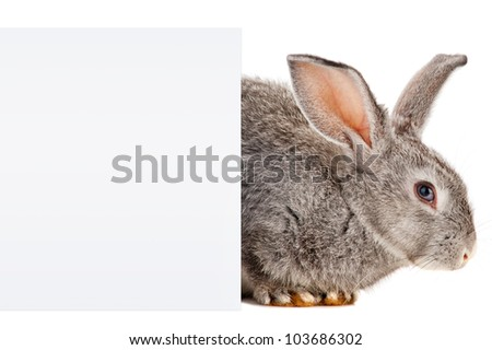 Gray Rabbit with a sheet of paper
