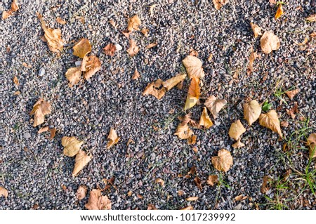 gray sandy stone ground with autumn leaves. background, texture. #1017239992