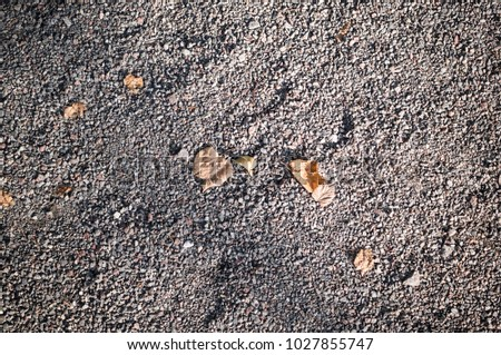 gray sandy stone ground with autumn leaves. background, texture. #1027855747