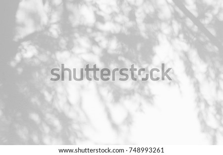 Gray shadow of natural pine leaves of palm tree and tree trunk falling on  white concrete wall for background design and wallpaper