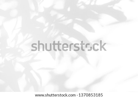 Gray shadow of the leaves on a white wall. Abstract neutral nature concept background