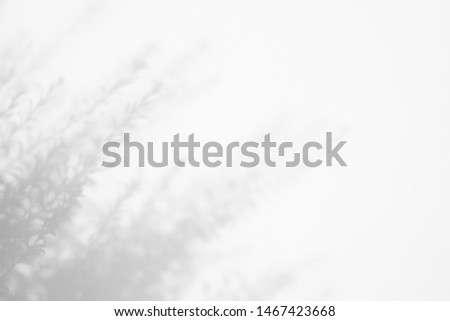 Gray shadow of the tree leaves on a white wall. Abstract neutral nature concept blurred background. Space for text.