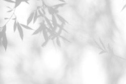 Gray shadow of the willow tree leaves on a white wall. Abstract neutral nature concept blurred background. Space for text. Overlay effect for photo.