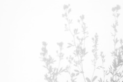 Gray shadows of the flowers and delicate grass on a white wall. Abstract neutral nature concept background. Space for text.