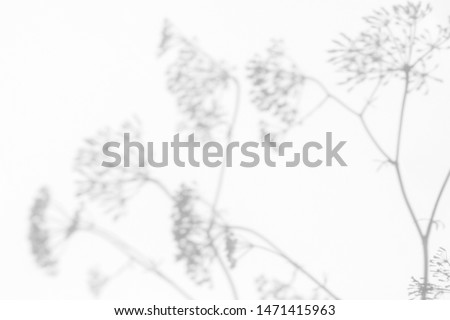 Gray shadows of the flowers and delicate grass on a white wall. Abstract neutral nature concept background. Space for text. Blurred, defocused.
