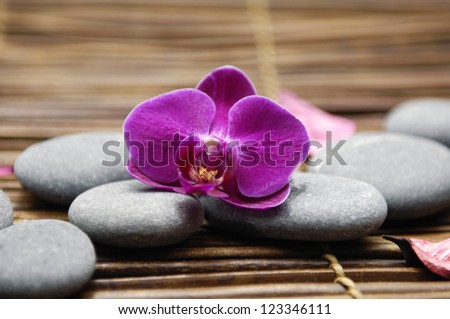 Gray stones and beautiful orchid.