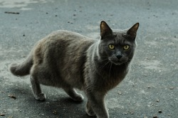 Gray street cat is walking down the street. A spotted cat sits on the sidewalk. Red cat is sitting at home. Red street cat is sitting on the street.