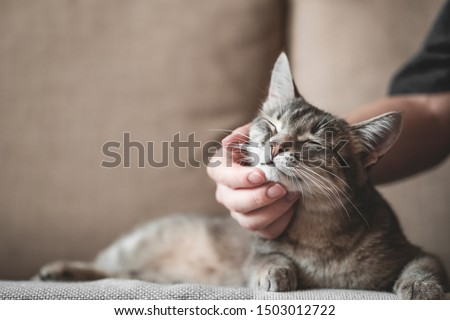 gray striped cat with woman's hand on a brown background. World Pet Day.