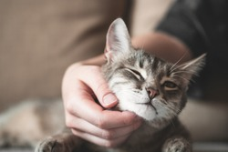 gray striped cat with womans hand on a brown background. World Pet Day.