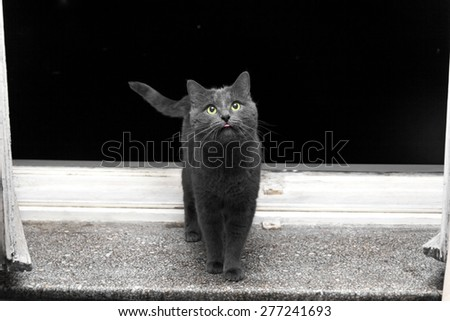 Gray surprised cat with pink tongue on window sill in evening