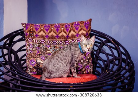 Gray tabby cat sitting on the rattan chair against backrest pillow. Vintage color.