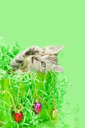 Gray tabby kitten sitting inside of a green Christmas present with green paper crinkles, tangled up with a light bulb garland tree decoration, green background.