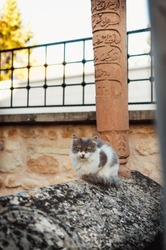 Gray white cat on the old grave. The cat is sitting on the old turkish ottoman grave. cat looking at the cemetery