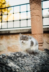 Gray white cat on the old grave. The cat is sitting on the old turkish ottoman grave. graveyard cat