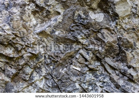 Grayish Old Weathered Natural Stone Texture #1443601958