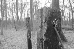 Grayscale Pole withcable going through in woods