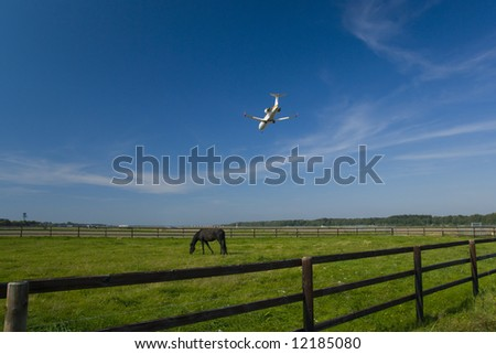 Grazed horse and a landing plane