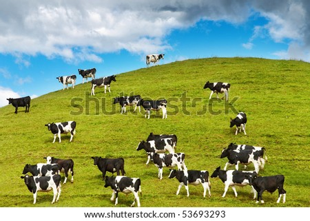 Grazing calves - stock photo