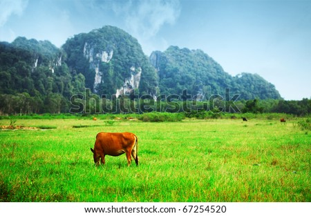 Grazing cow on a valley with green meadow and mountains on a horizon