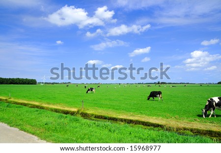 Grazing cows in the meadow.
