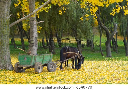 grazing horse with foal in the autumn forest