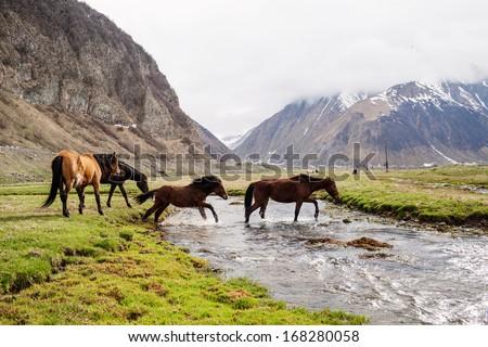 Grazing horses in the mountains. Stepantsminda, Georgia