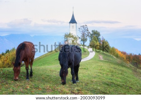 Grazing horses on the Jamnik church St Primus and Felician background at sunset, Alps mountains, Slovenia. Amazing landscape, travel, famous tourist attraction Zdjęcia stock ©