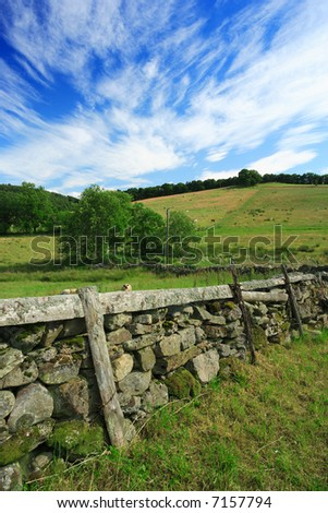Grazing livestock on a grass meadow of Scotland.  Old stone fence separates the properties.