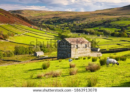 Grazing Sheep and Hay Barns, Swaledale in Autumn, Yorkshire Dales, England, UK. Stock fotó ©