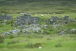 Grazing sheep behind stone wall,  Boley Village, Achill, County Mayo, Ireland, Eire