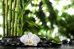 Grean bamboo leaves and white orchid flower over black zen stones on tropical leaves background