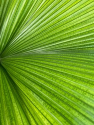 Grean leaf with a texture