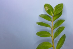 Grean leaves border on blue background. Nature frame with copy space. Wallpaper with leaf pattern.