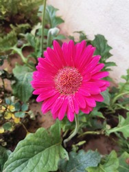 Grean plants in our garden. And beautiful flowers with bright colours.