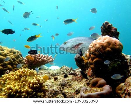 Great Barrier Reef, Outer Reef, Cairns, Queensland, Australia #1393325390