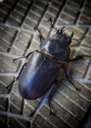 Great black beatle, on the sole of shoe.