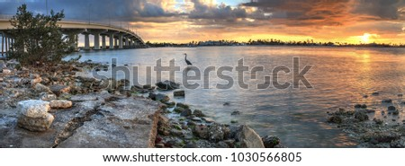 Great blue heron Ardea herodias stands in the water as the sun sets over the bridge roadway that journeys onto Marco Island, Florida.