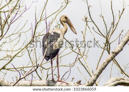 Great blue heron, Great blue heron on a tree branch, Great blue heron on a deserted tree,