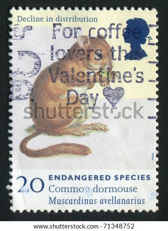 GREAT BRITAIN - CIRCA 1997: stamp printed by Great Britain, shows Endangered Species. Common dormouse, circa 1997.