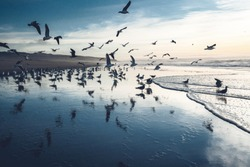 Great colony of seagulls on the beach. Dramatic seascape, blue hour