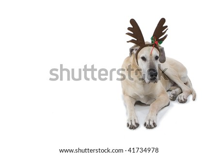 Great Dane With Reindeer Antlers