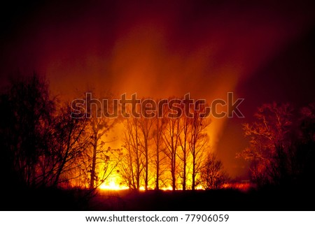 Great fire of forest fire during the night.