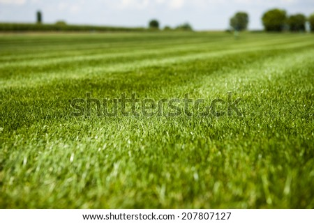 Great green grass field on a sunny day