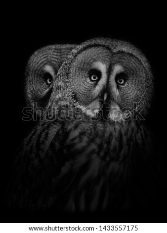 Great Grey Owl Fine Art Portrait
