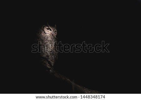 Great-Horned Owl Lurking in the Shadows - Perched on a Low Branch - Black Background in Wide Landscape Orientation with Copy Space #1448348174