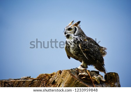 great horned owl perch #1233959848
