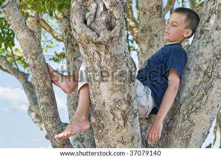 great image of a boy in a tree