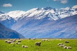 great landscape around Queenstown , NewZealand